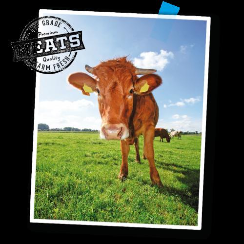 Rinder auf sonniger Weide